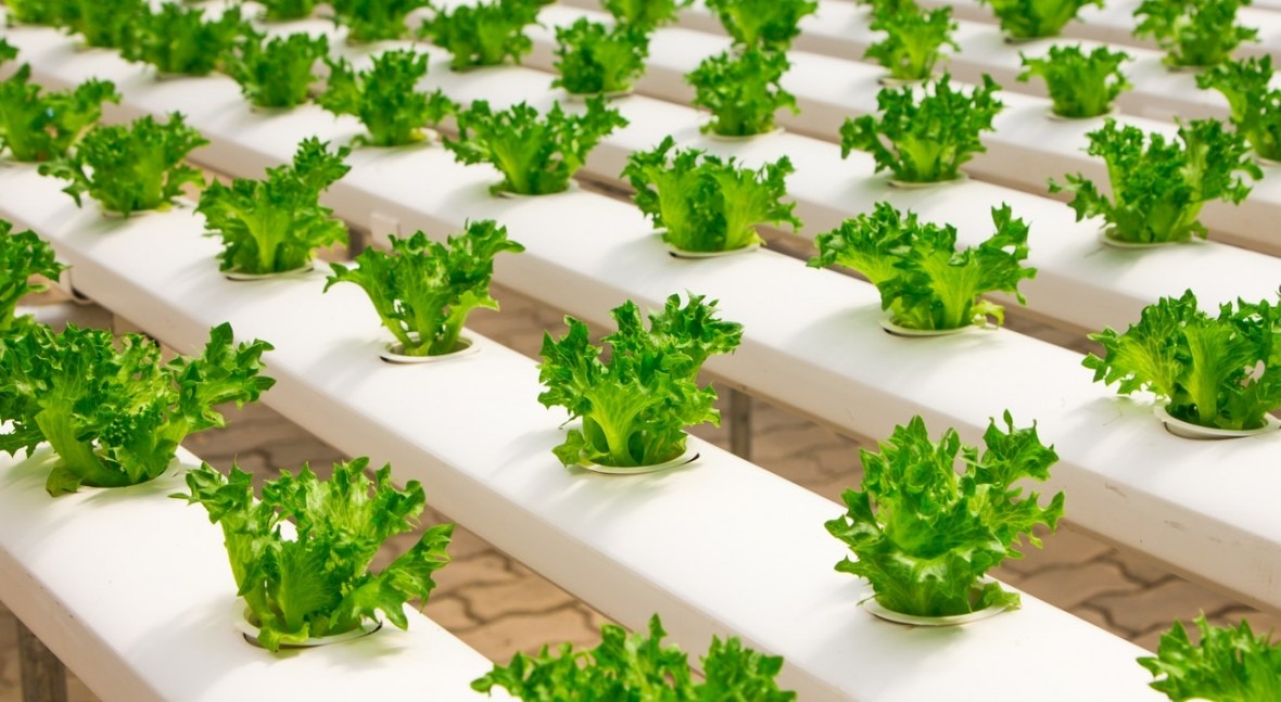 Water-efficient urban farms sprouting up