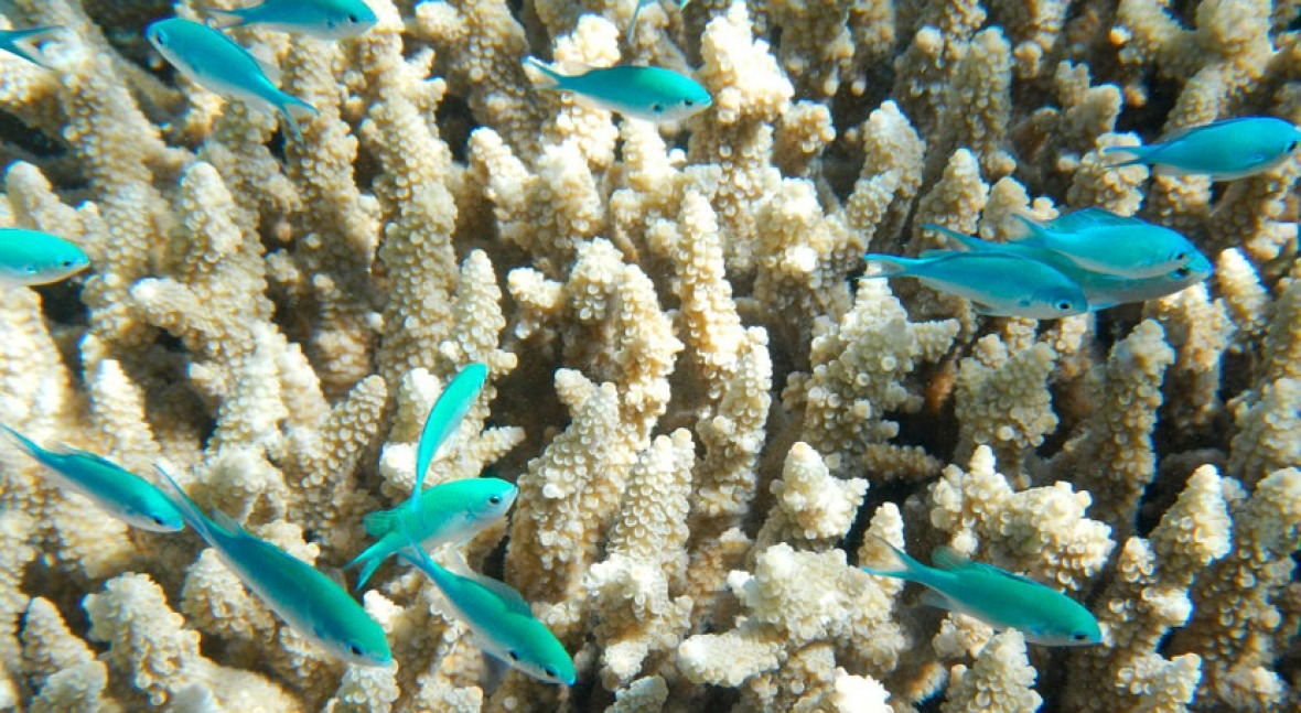 'Bright white skeletons': some Western Australian reefs have the lowest coral cover on record