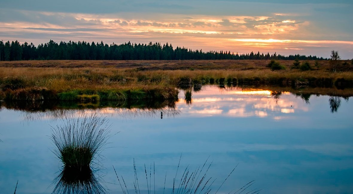 World Wetlands Day 2019: we are not alone against climate change