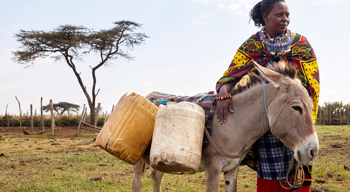 African donkeys stolen and slaughtered impacts access to water for thousands of families