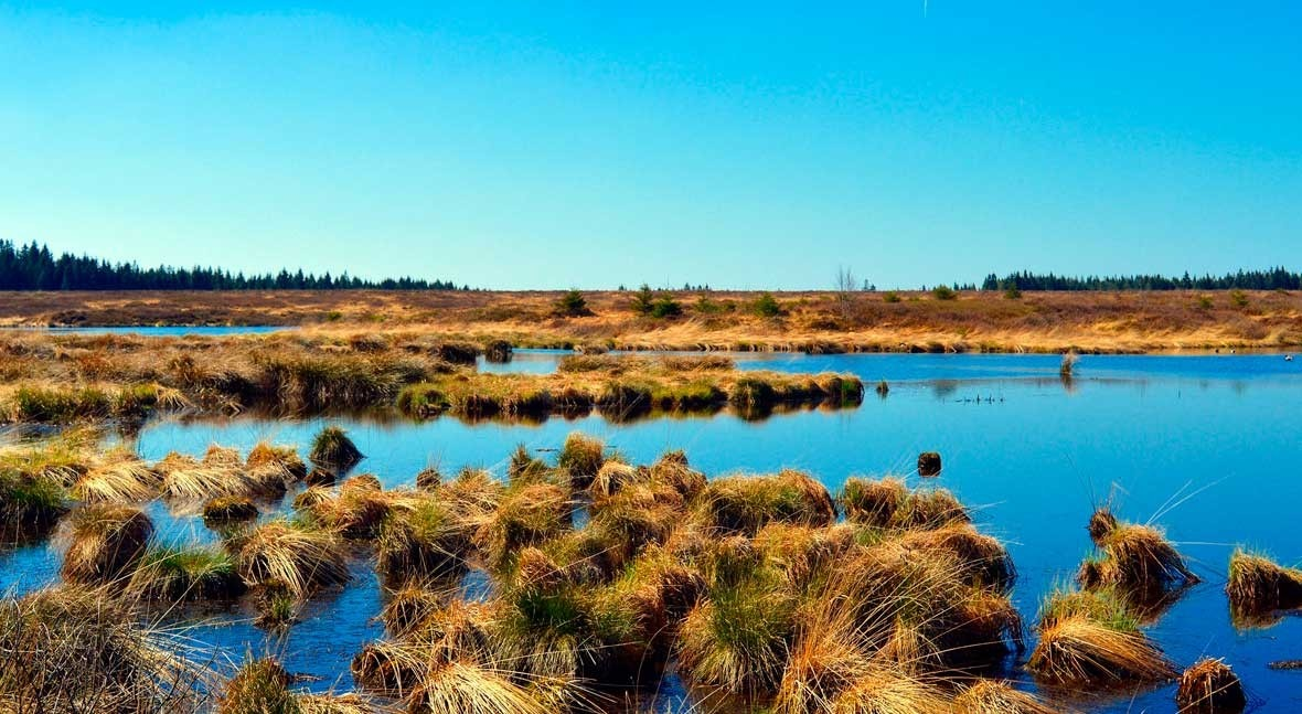 Wetlands do the job of expensive technology, if we let them