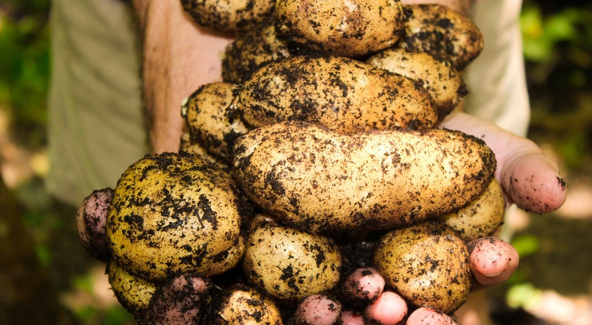 5 ways to reduce the water footprint of our food