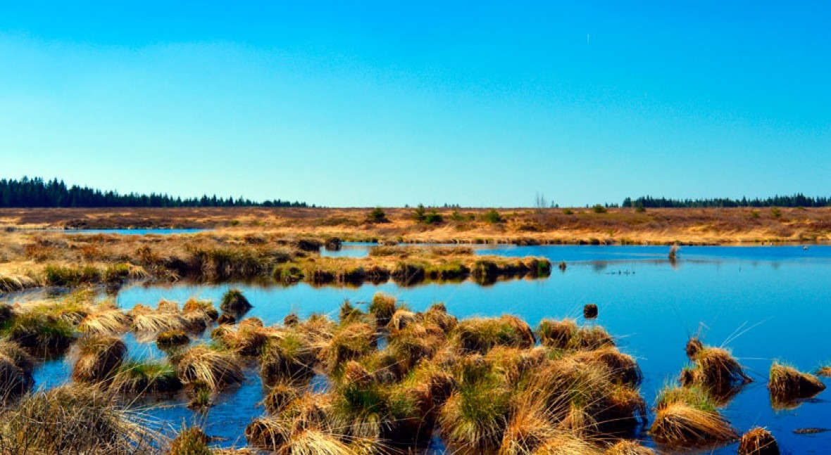 Financial incentives could spur cities and land owners to protect wetlands