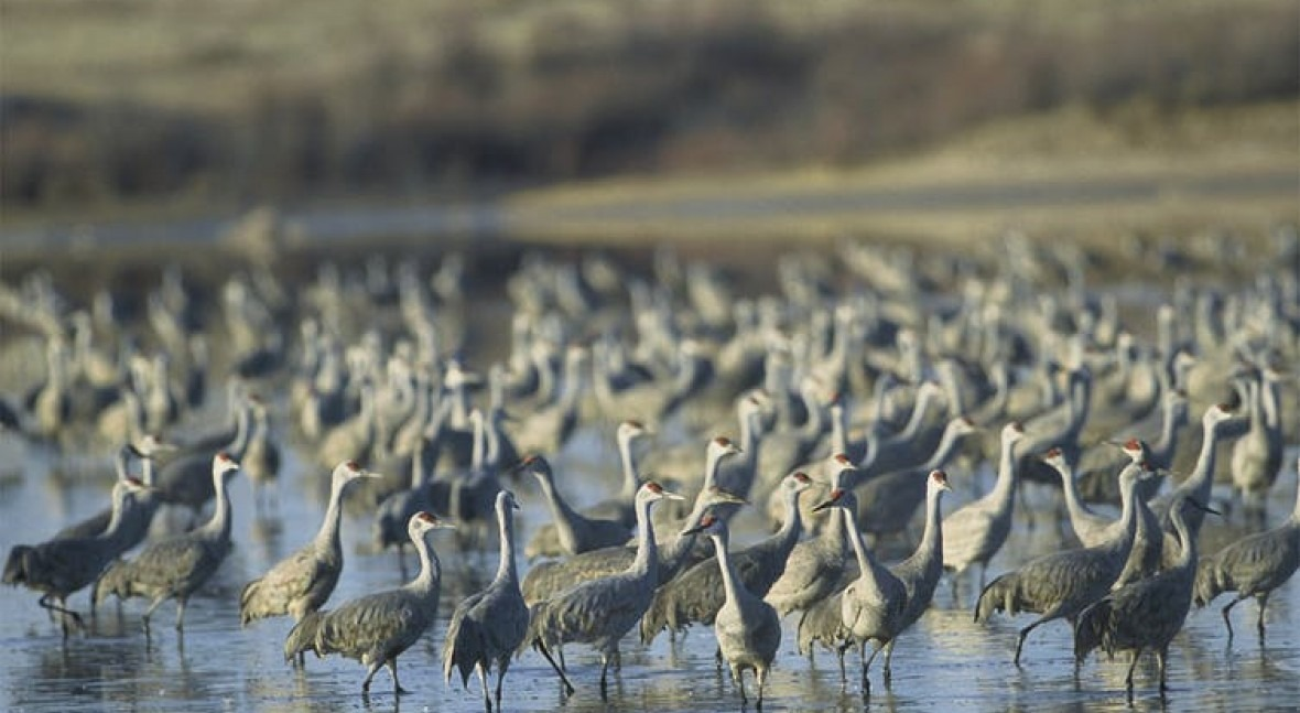 Repealing the Clean Water Rule will swamp the Trump administration in wetland litigation