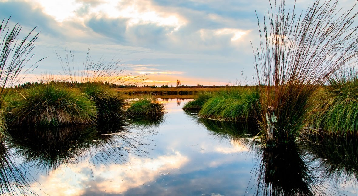 World Wetlands Day 2020: Why is biodiversity important?