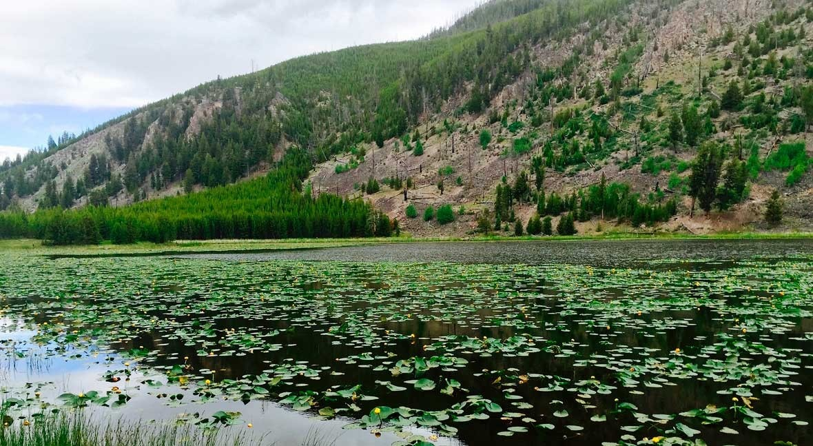 New EPA rule limits states' authority to protect their waters