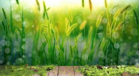 Using nature to treat wastewater