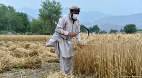 Drought threatens the livelihoods of 7 million farmers in Afghanistan