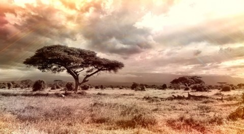 Shrubs are most vulnerable to extreme drought in savannas