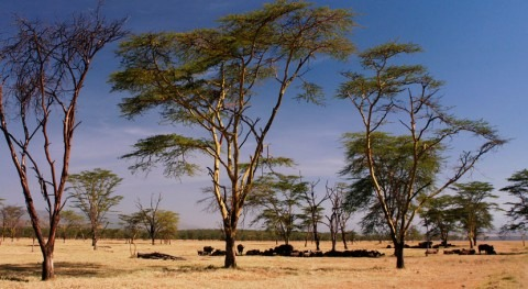 Trees' water-use strategies can intensify droughts