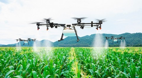 With AI against drought and pest infestation