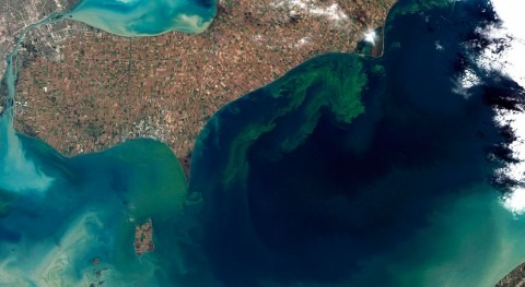 Expert discusses the harms of algal blooms