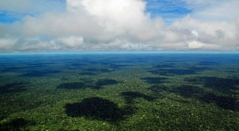 Amazon rainforest fires: Why is one of the planet's most humid areas burning?