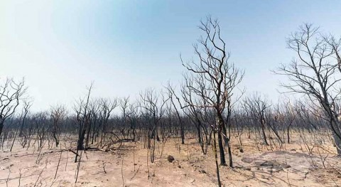 New report tells grim story of heat, drought and fire in Australia
