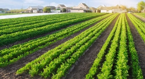 Climate change driving importance of land drainage for farmers