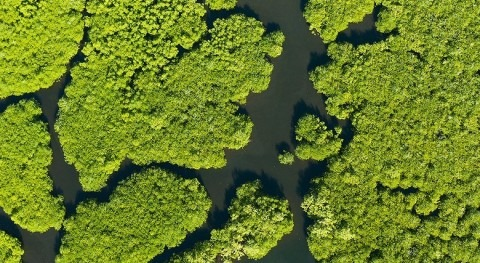 How mangroves can help tackle water scarcity and land degradation