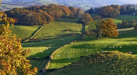 South Downs National Park sets out vision for the future