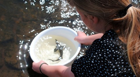 Why do people support fish species conservation in European rivers?