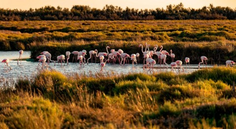 World Wetlands Day: The beauty of biodiversity
