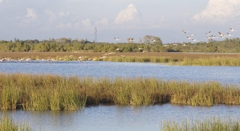 Biodiversity has changed in one of the largest and most biodiverse Mediterranean wetlands