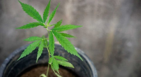 Resource Innovation Institute forms water working group to investigate cannabis water impacts