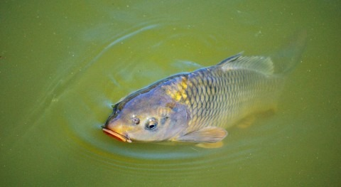 Study: Treated wastewater may be safe for aquaculture