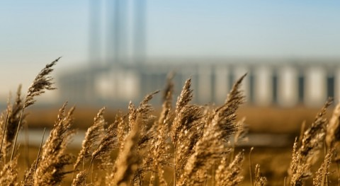 Scientists Sequence Genome of Broomcorn Millet, Cereal Crop with Highest Water-use Efficiency