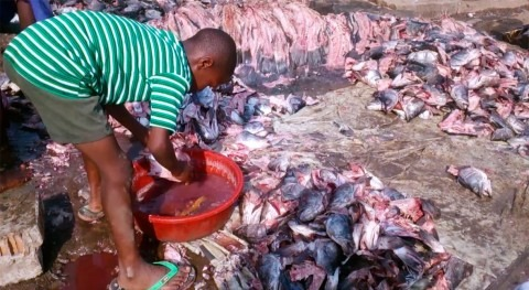 Clean water to wash fish