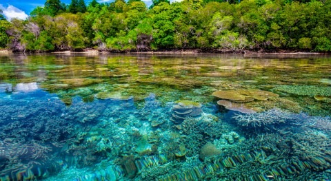 Coral reefs provide flood protection worth $1.8 billion every year – it's time to protect them