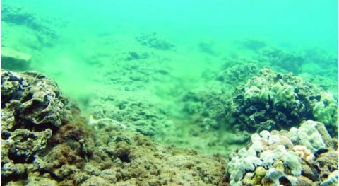 Coral study traces excess nitrogen to Maui wastewater treatment facility, Hawaii