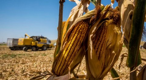 Climate change threatens future of farming in Europe