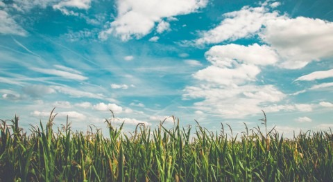 warming Midwest increases likelihood that farmers will need to irrigate