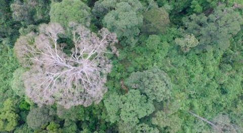 New research is using drones to tackle climate change