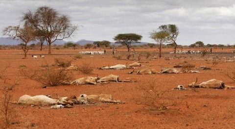 Scientists sound the alarm over drought in East Africa: what must happennext