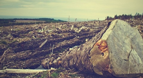 Urbanites face heightened flood risk due to forest loss