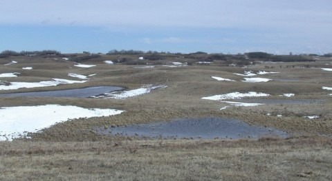 Do depressions in Canadian prairies hold the key to groundwater recharge?