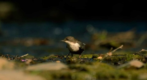 Scientists find first evidence of microplastics passing from insects to predators in rivers