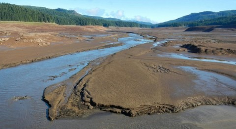Study finds experimental extreme draining of reservoir has unexpected ecological impacts