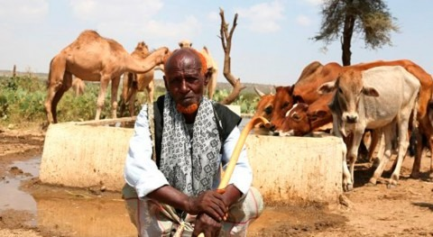 Urgent drought response launched in Somaliland and Kenya