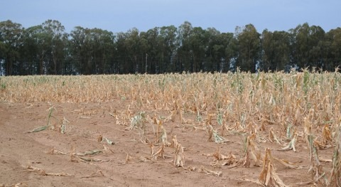 When drought threatens crops: NASA's role in famine warnings