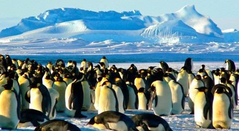 Nature's dangerous decline 'unprecedented' species extinction rates 'accelerating'