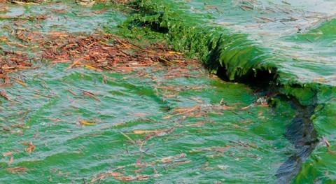 It's already big year for algae outbreaks