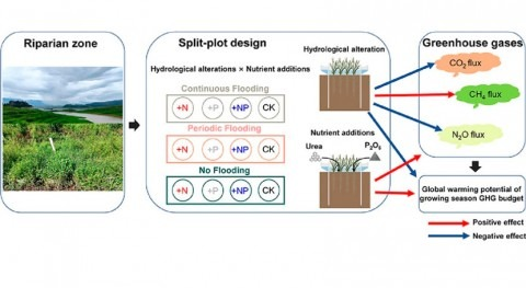 Hydrological alteration and nutrient input greatly affect greenhouse gases emission