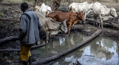Food security and water security go hand-in-hand