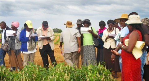 Drought-tolerant crops to contribute to food security in Namibia