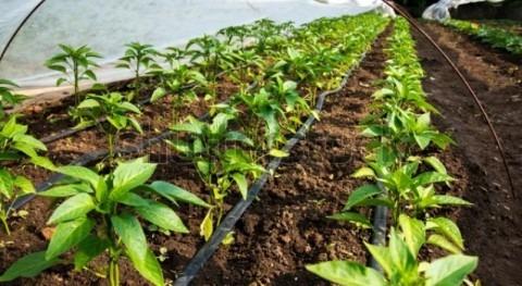 Transforming farmers toward innovation