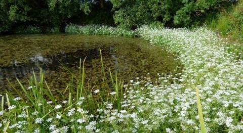 Restoring farmland ponds can help save our declining pollinators