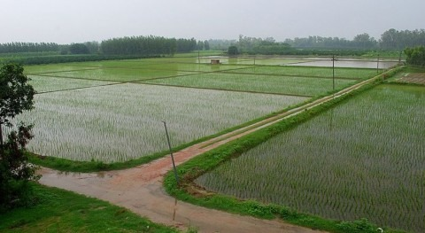 Punjab, the land of the five rivers, turned into India's breadbasket