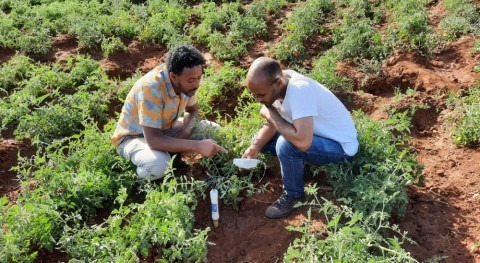 Finding the economic value of irrigation water in the Nile Basin to enhance water saving