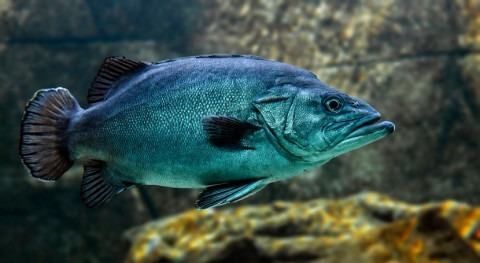 Scientists study fish to learn how to adapt to the impacts of climate change